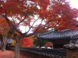 Most everyone agrees that Korea is most beautiful in Fall.
